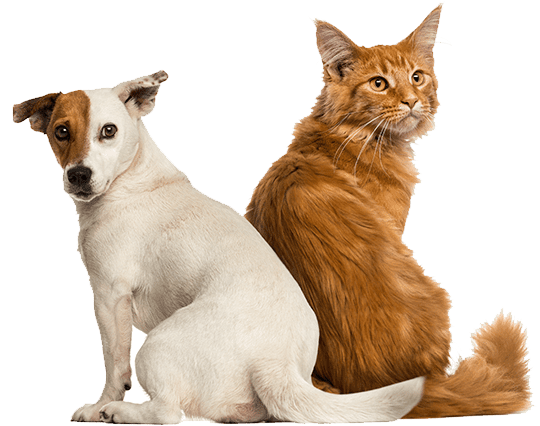 Veterinarian Animal Hospital In Pewaukee Wi Pewaukee Veterinary Services